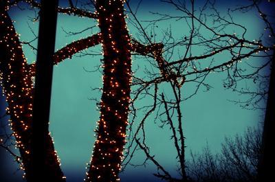Tavern_trees