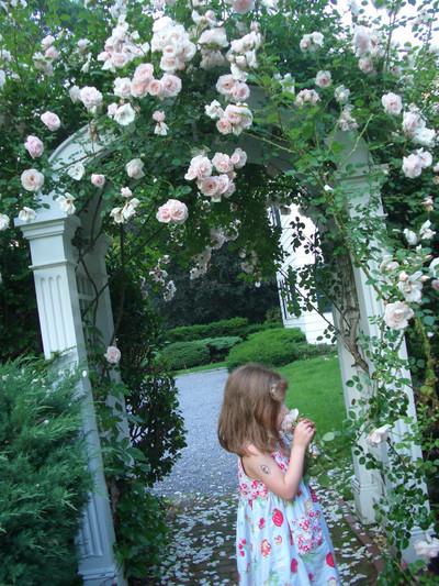 Alice_flower_1